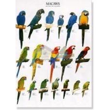 Guacamayos - Macaws