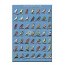 Canarios de Color 3